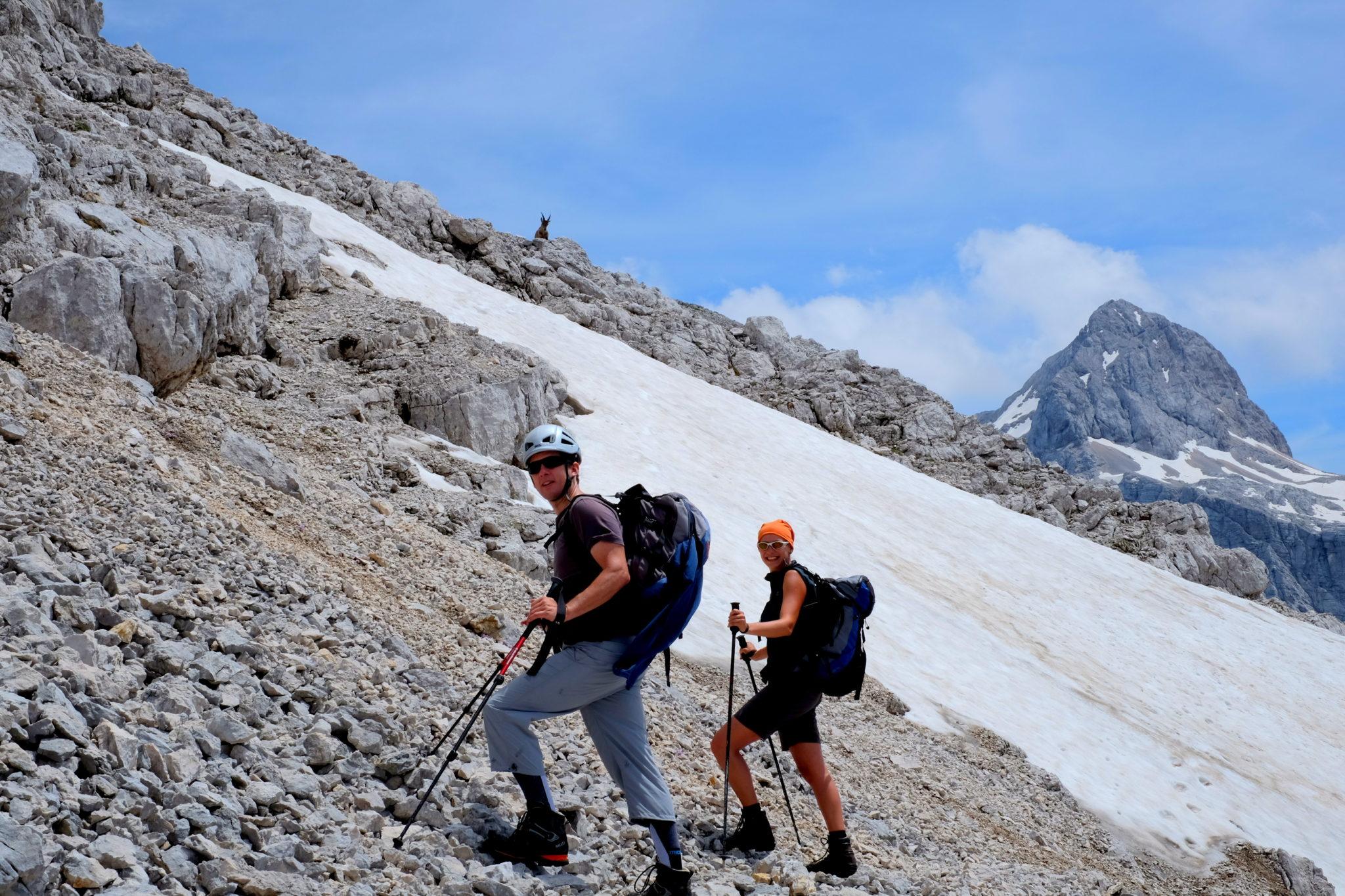 Chamois in the Julian Alps.
