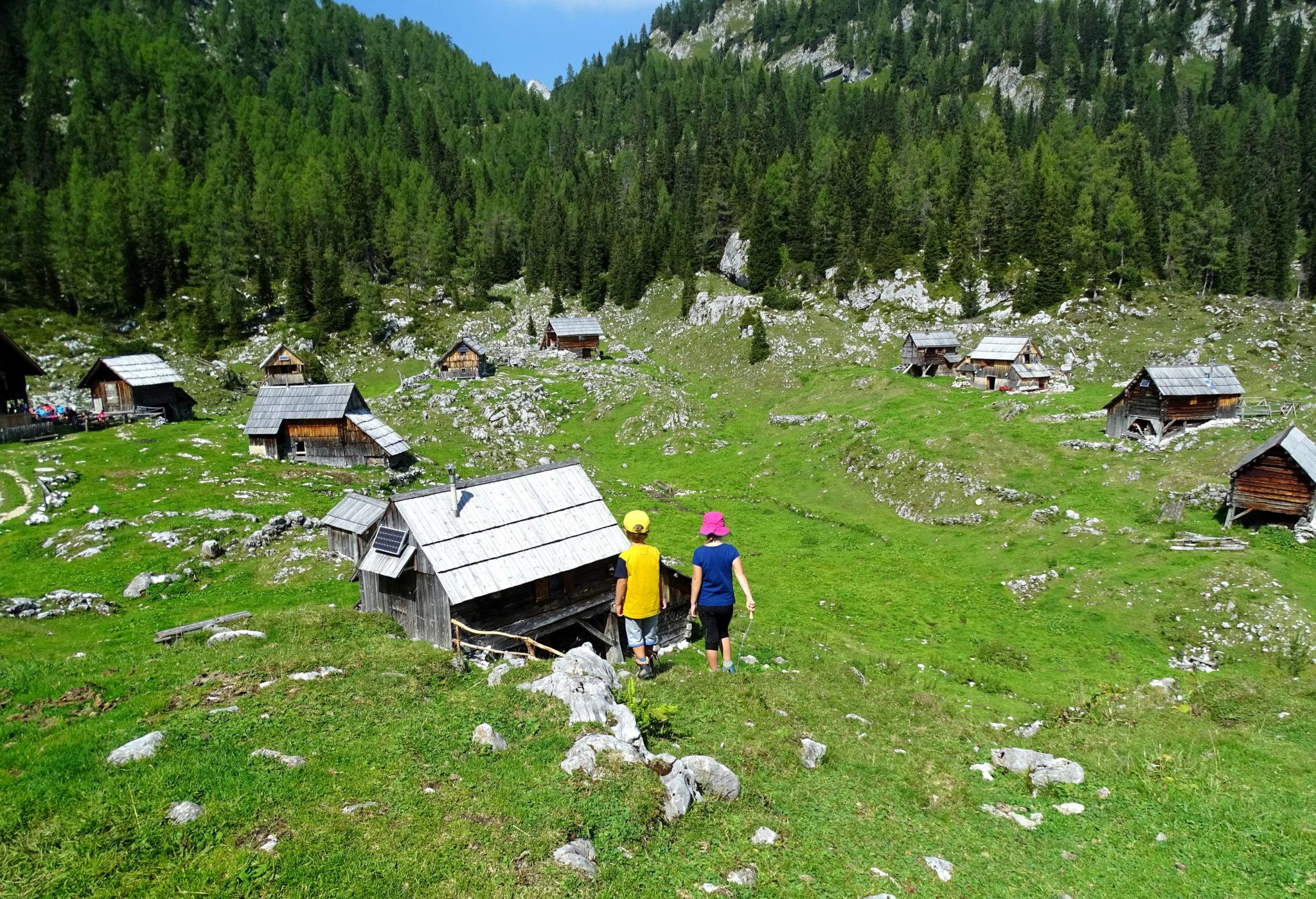 Family hiking; the alpine pasture Dedno polje