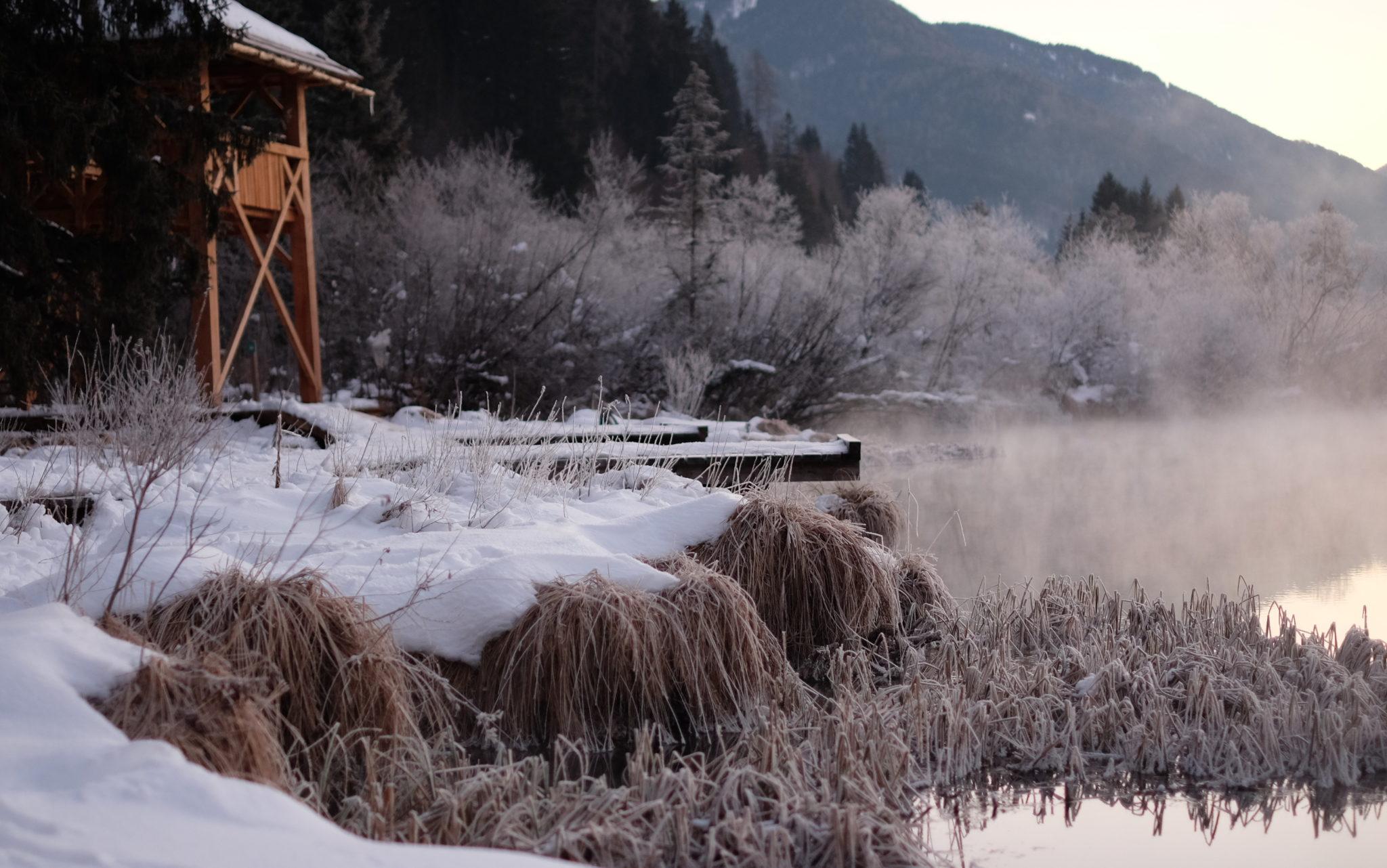 The Zelenci Springs near Kranjska Gora