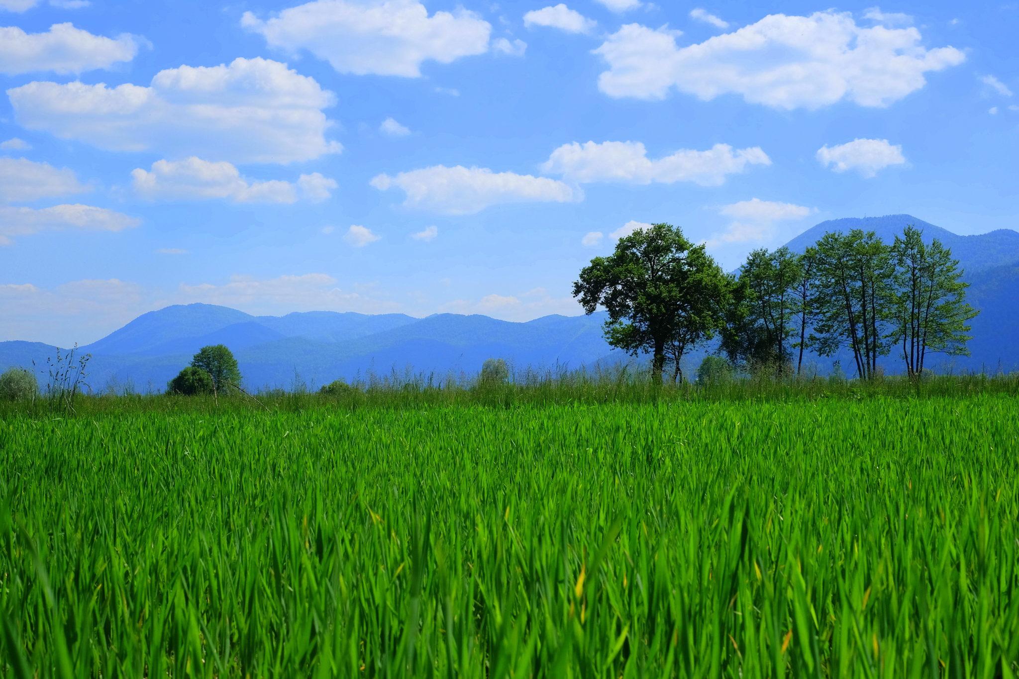 The Ljubljana Marshes, Ljubljansko barje, Slovenia