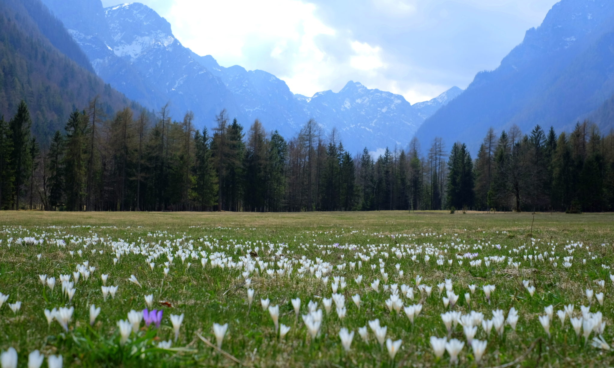 The Radovna Valley in spring with wild flowers