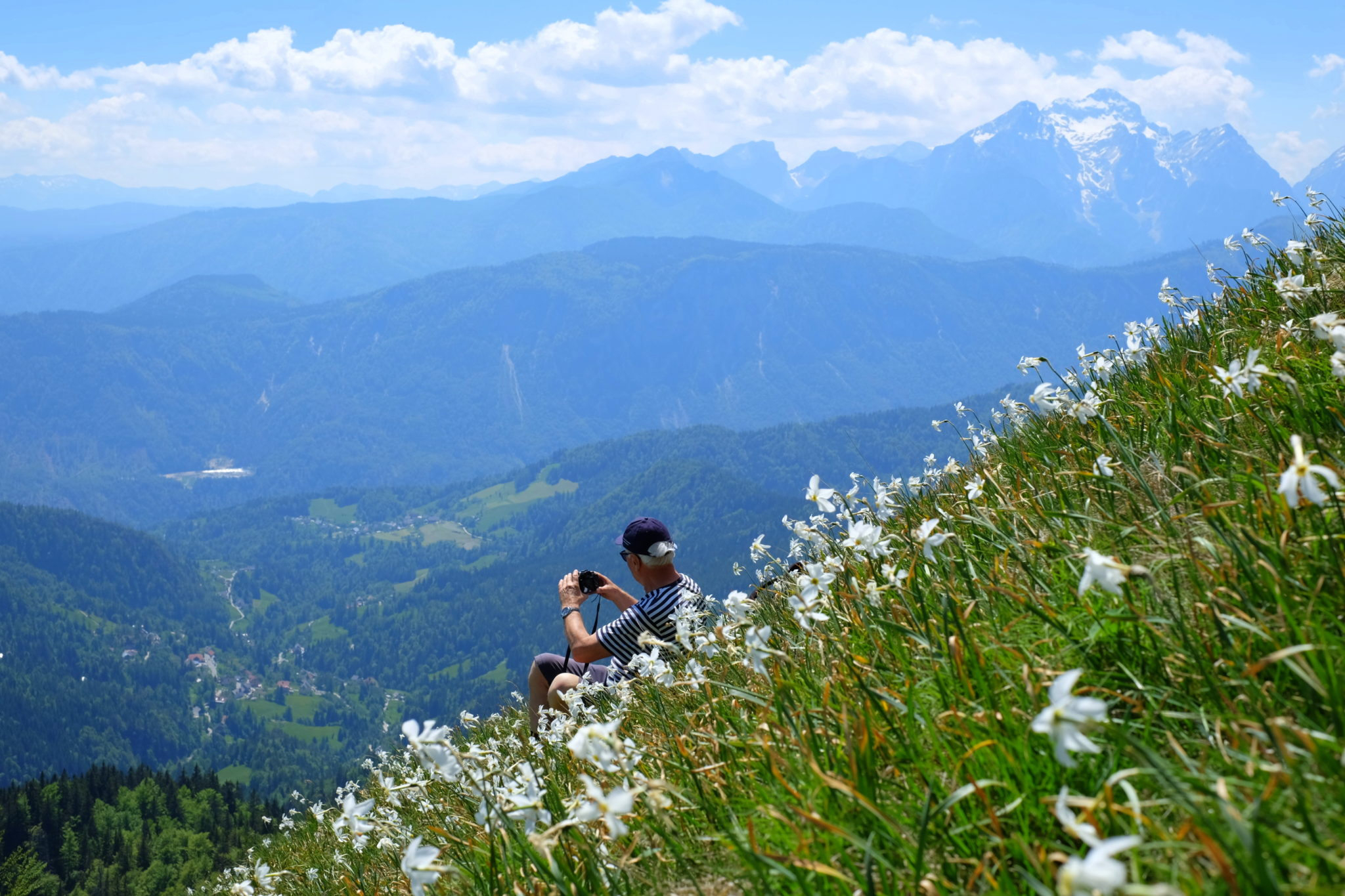 Photographing beautiful narcissi on the Golica mountain, Slovenia