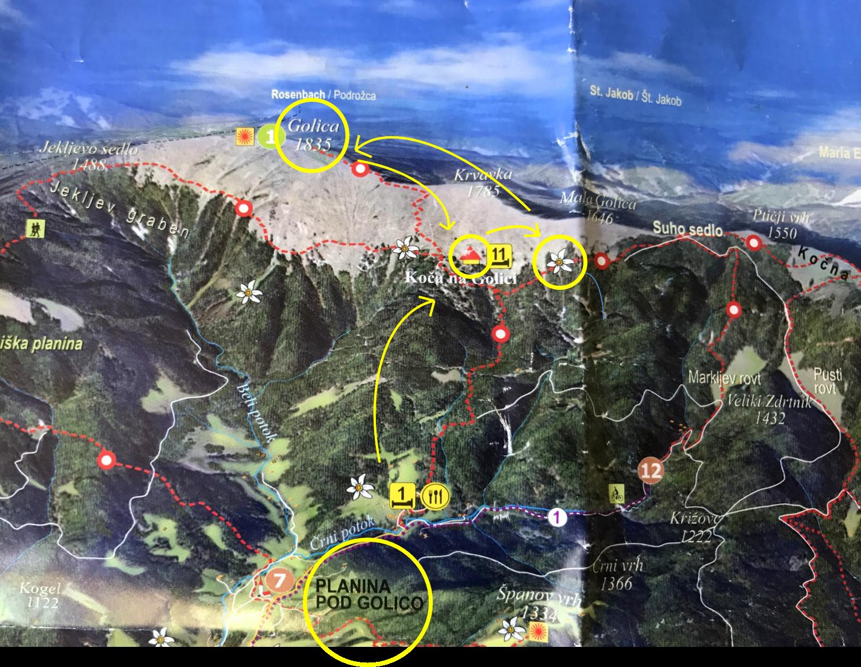 Golica narcissi map