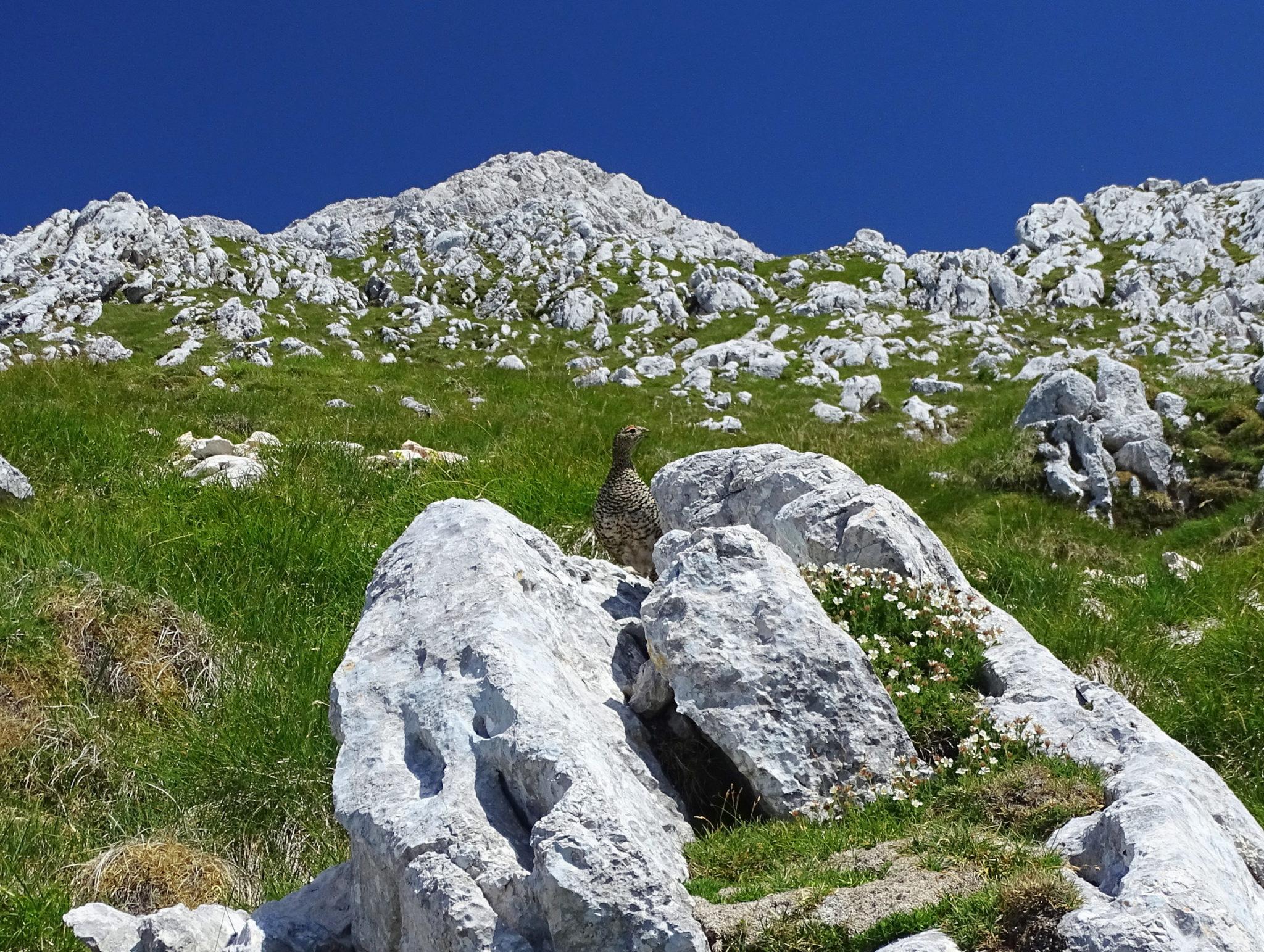 A bird in high mountains