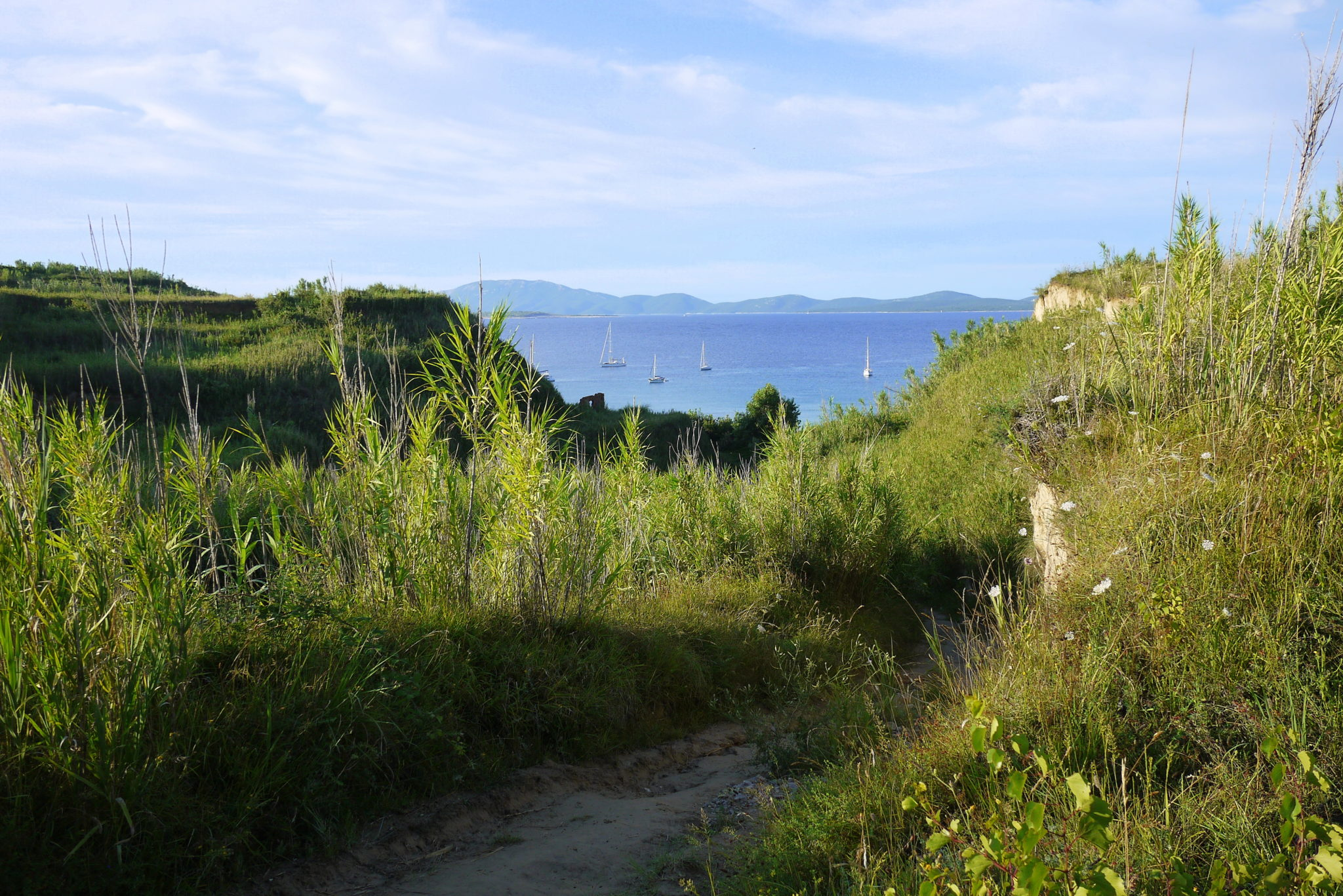 The Susak island is sandy and overgrown with bamboo.