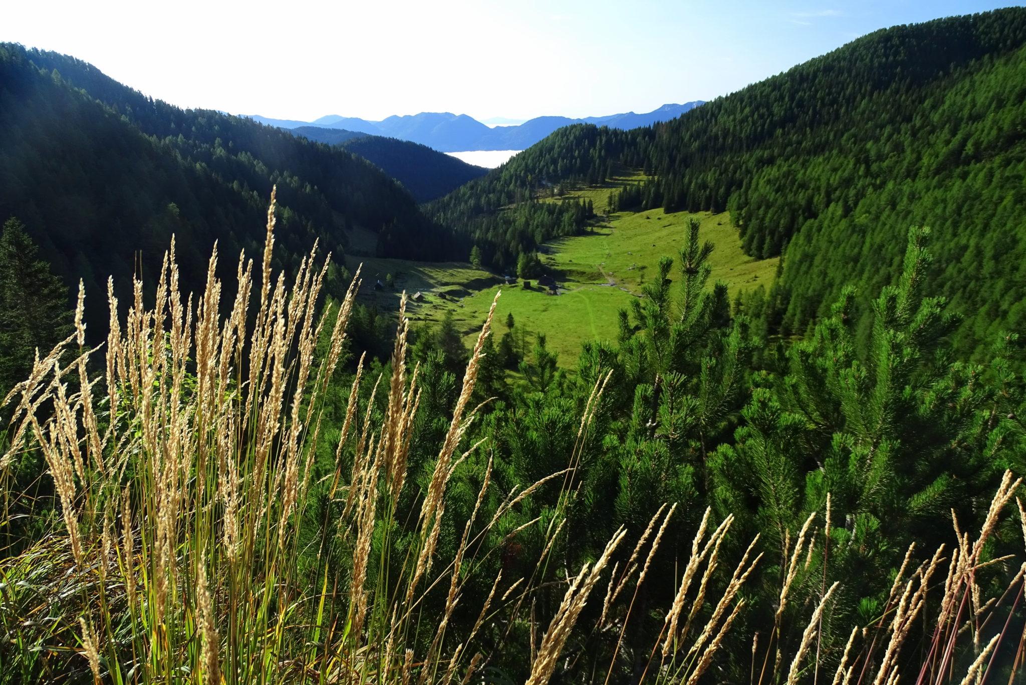 Konjščica Plateau, Pokljuka