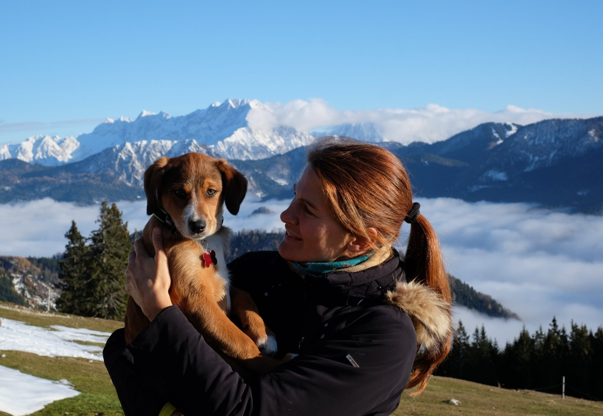 A puppy and a woman hiker in the mountains, Slovenia