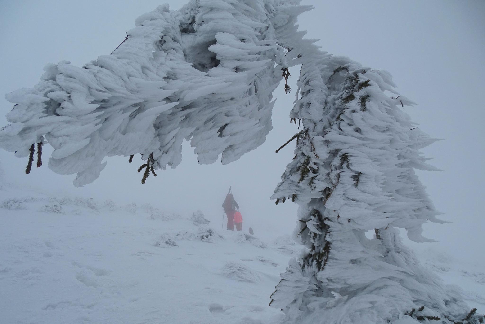 Snežnik in winter, ice, frozen trees