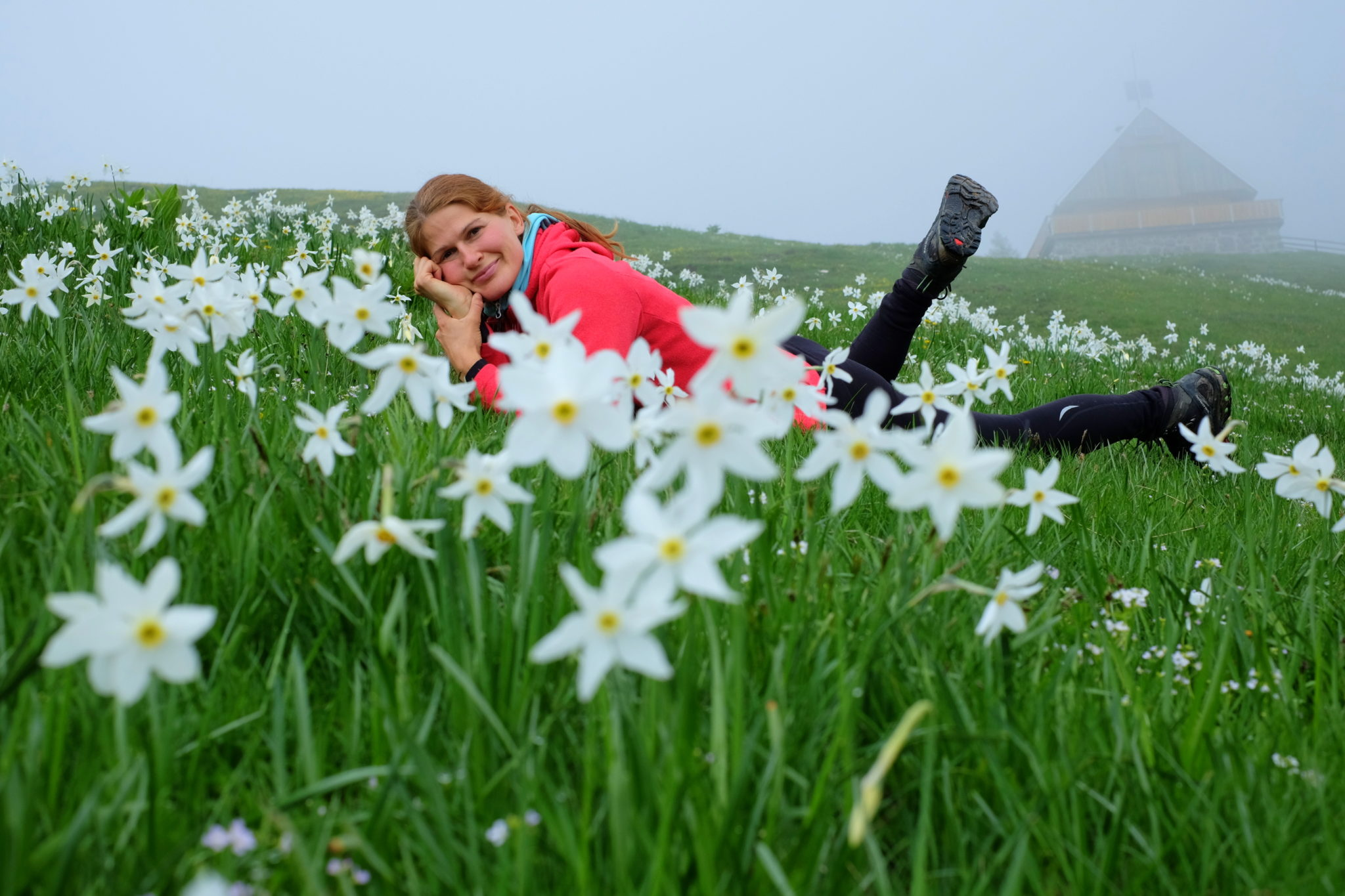 Wild daffodils in the Slovenian Alps, the Karawanks, Dovška Rožca