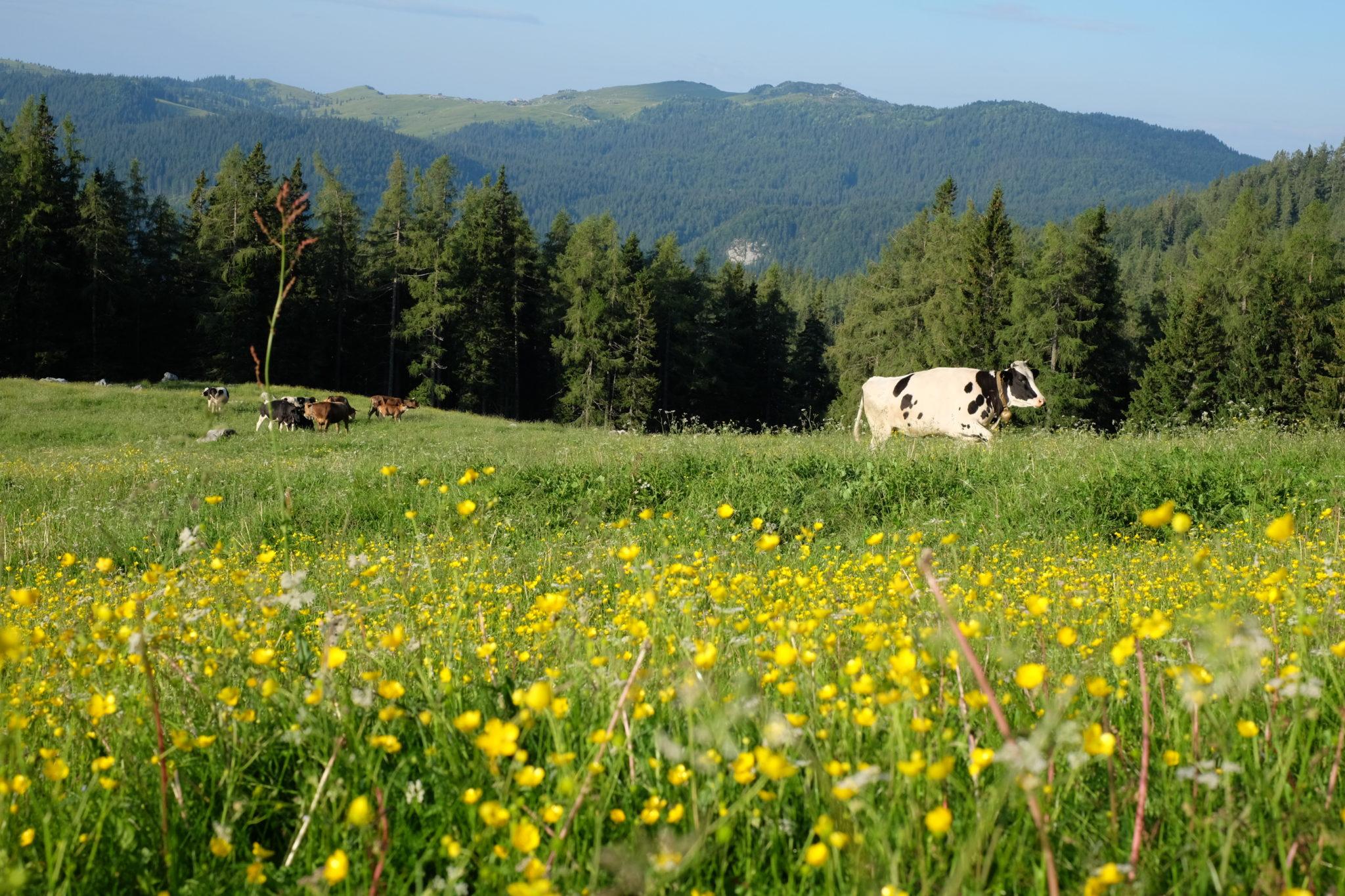 Podvežak Meadow, the Kamnik-Savinja Alps, Slovenia