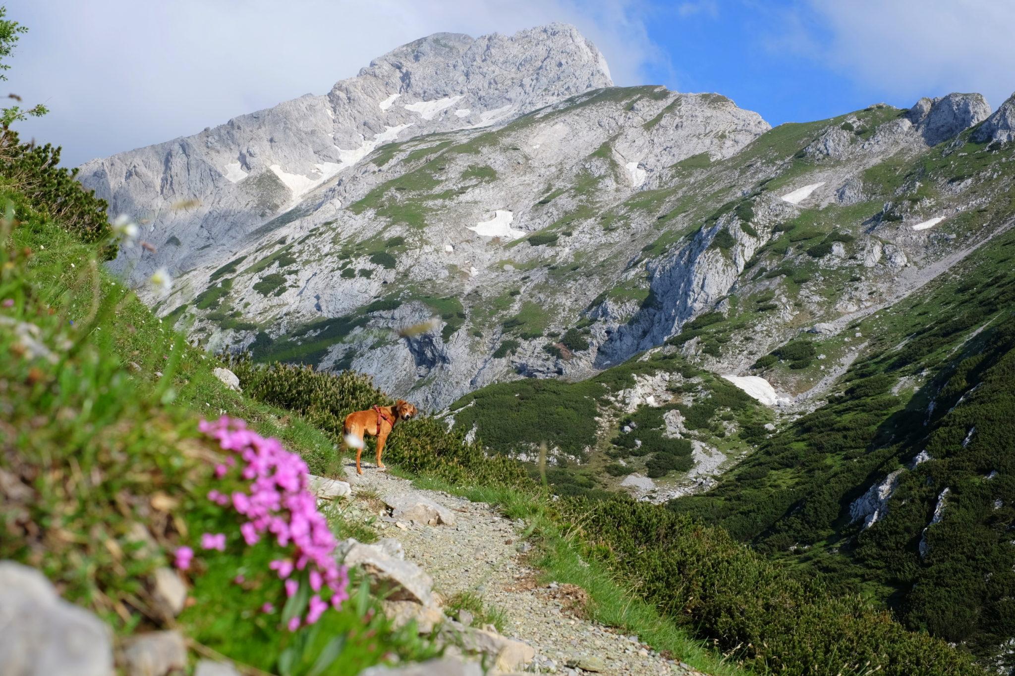 The trail from Podvežak towards Ojstrica and Korošica, the Kamnik-Savinja Alps, Slovenia