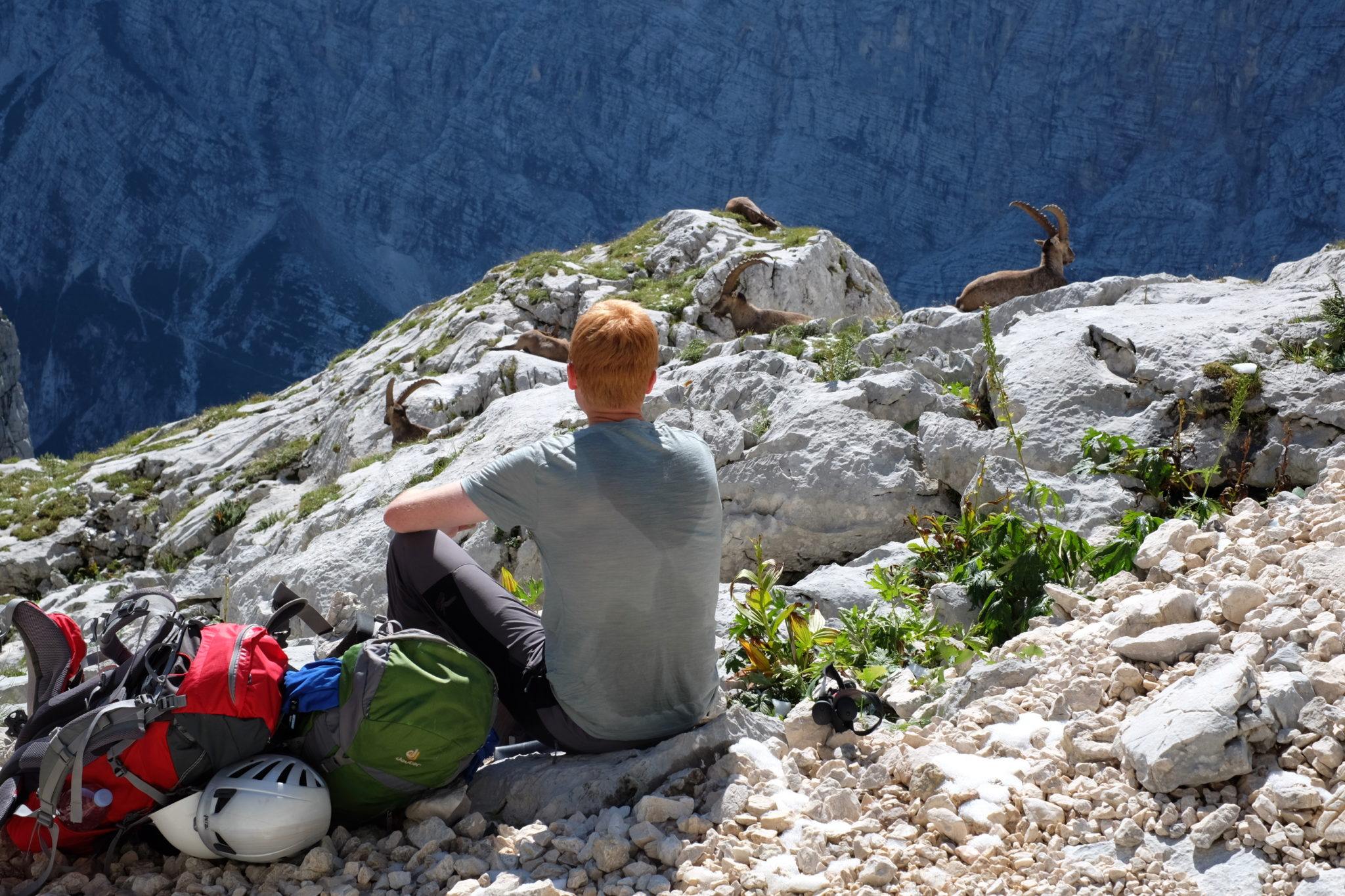 Enjoying a snack in the mountains with Alpine ibexes, Triglav National Park, Slovenia