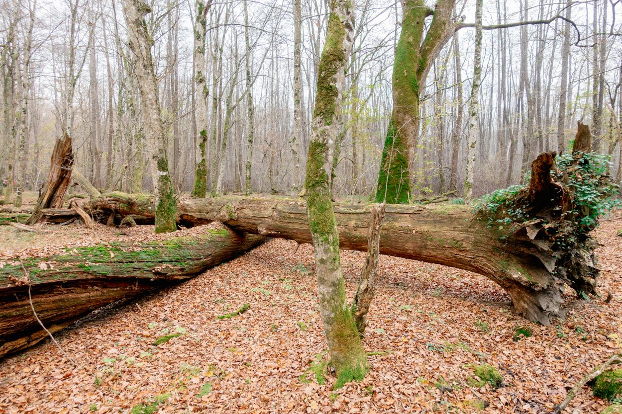 Krakov Virgin Forest, Krško, Slovenia