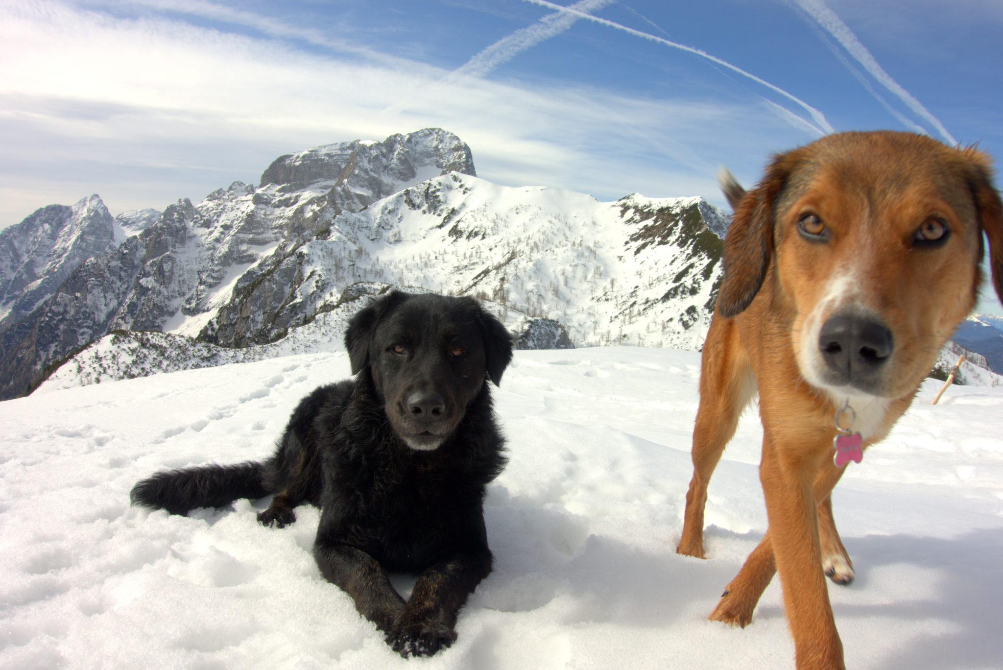 Hiking dogs, Slovenia